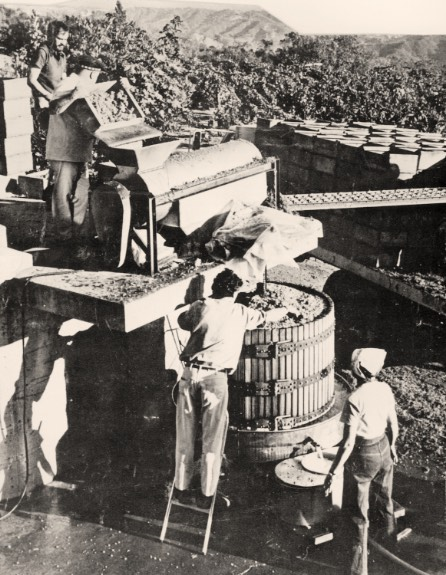 Vintage photo of grapes being processed