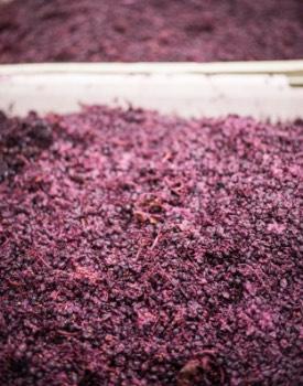 Crushed grapes in bin