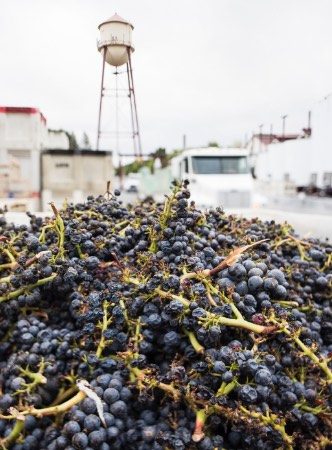 Grapes with Martin Ray water tower in background