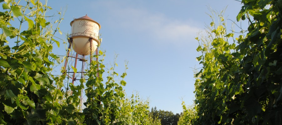 Looking up at Martin Ray water tower from vineyard